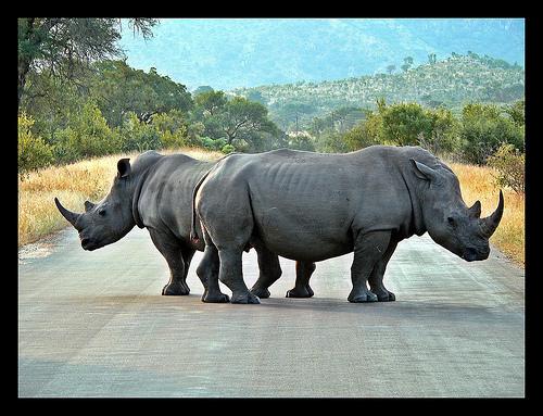 rhinoroadblock